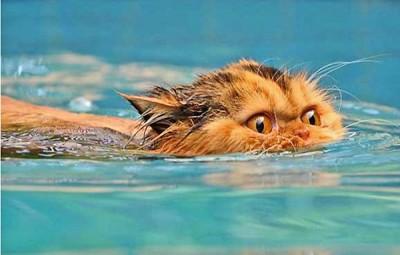 motan piscina